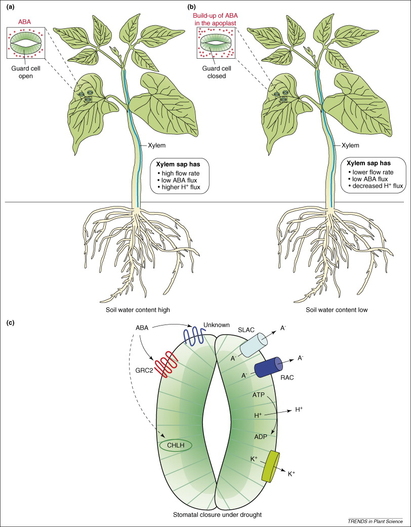 canadian journal of plant science instructions to authors