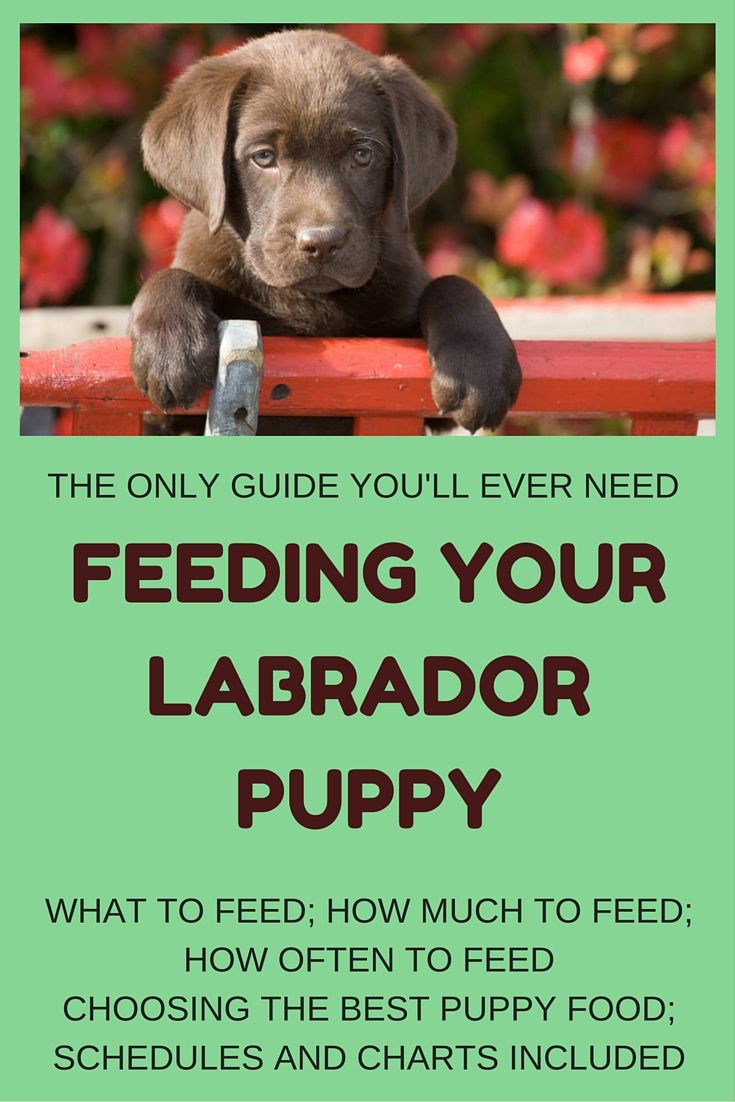 feeding instructions for dogs