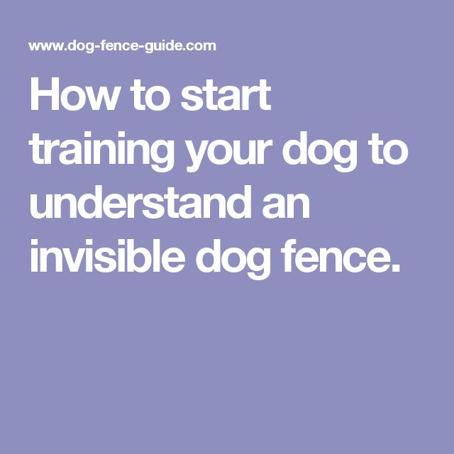 invisible fence training instructions